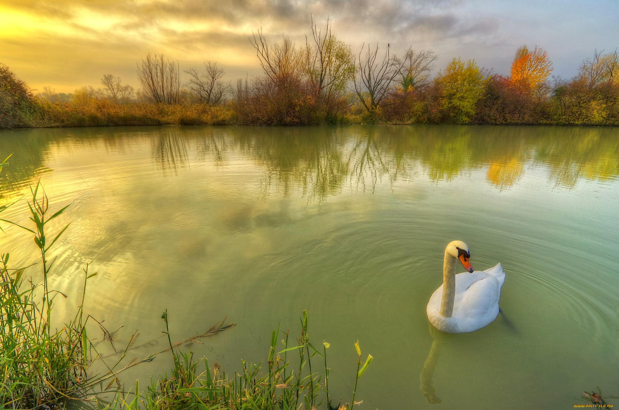 для картинки лебединое озеро природа дню святого валентина
